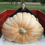 Worlds largest pumpkin