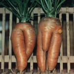 Funny shaped vegetables