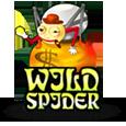 Wild spider