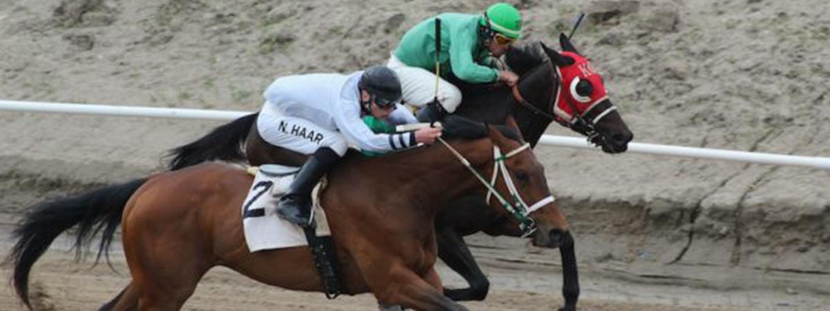 Northeast area horse racing 1