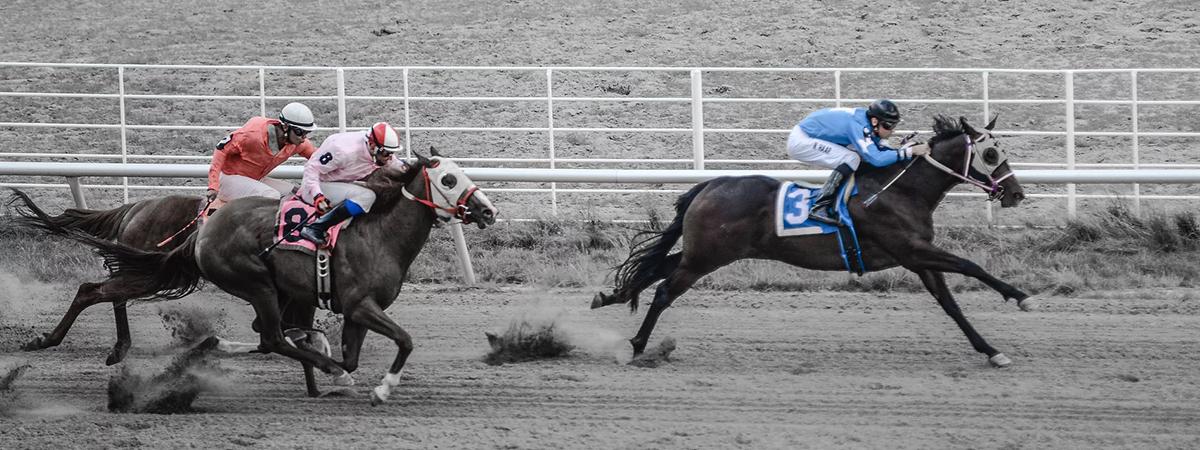 North dakota horse park 1