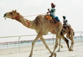 Global Bet Bringing a Camel to ICE Show