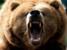 Bear1500 avatar