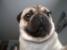 zenekk87 avatar